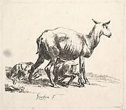 Sheep with Lamb Nursing