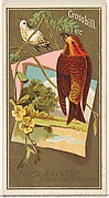 Crossbill, from the Birds of America series (N4) for Allen & Ginter Cigarettes Brands