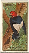 Woodpecker, from the Birds of America series (N4) for Allen & Ginter Cigarettes Brands