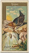 Dipper, from the Birds of America series (N4) for Allen & Ginter Cigarettes Brands