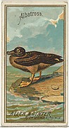 Albatross, from the Birds of America series (N4) for Allen & Ginter Cigarettes Brands