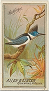 Kingfisher, from the Birds of America series (N4) for Allen & Ginter Cigarettes Brands