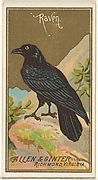 Raven, from the Birds of America series (N4) for Allen & Ginter Cigarettes Brands