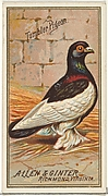 Tumbler Pigeon, from the Birds of America series (N4) for Allen & Ginter Cigarettes Brands