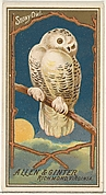 Snowy Owl, from the Birds of America series (N4) for Allen & Ginter Cigarettes Brands