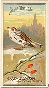 Snow Bunting, from the Birds of America series (N4) for Allen & Ginter Cigarettes Brands