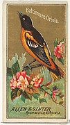 Baltimore Oriole, from the Birds of America series (N4) for Allen & Ginter Cigarettes Brands