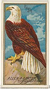Eagle, from the Birds of America series (N4) for Allen & Ginter Cigarettes Brands