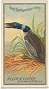 Great Northern Diver (Loon), from the Birds of America series (N4) for Allen & Ginter Cigarettes Brands