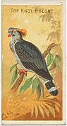 Top Knot Pigeon, from the Birds of the Tropics series (N5) for Allen & Ginter Cigarettes Brands