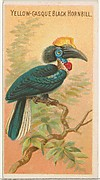 Yellow-Casque Black Hornbill, from the Birds of the Tropics series (N5) for Allen & Ginter Cigarettes Brands