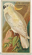 Yellow-Crested Cockatoo, from the Birds of the Tropics series (N5) for Allen & Ginter Cigarettes Brands