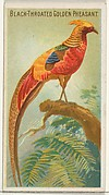 Black-Throated Golden Pheasant, from the Birds of the Tropics series (N5) for Allen & Ginter Cigarettes Brands