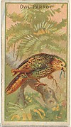 Owl Parrot, from the Birds of the Tropics series (N5) for Allen & Ginter Cigarettes Brands