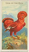 Cock-of-the-Rock, from the Birds of the Tropics series (N5) for Allen & Ginter Cigarettes Brands