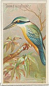 Sacred Kingfisher, from the Birds of the Tropics series (N5) for Allen & Ginter Cigarettes Brands