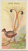 Lyre Bird, from the Birds of the Tropics series (N5) for Allen & Ginter Cigarettes Brands
