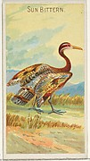 Sun Bittern, from the Birds of the Tropics series (N5) for Allen & Ginter Cigarettes Brands