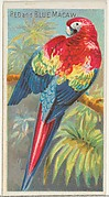 Red and Blue Macaw, from the Birds of the Tropics series (N5) for Allen & Ginter Cigarettes Brands
