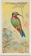 Schreiber's Hummingbird, from the Birds of the Tropics series (N5) for Allen & Ginter Cigarettes Brands