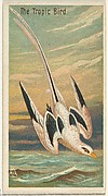 The Tropic Bird, from the Birds of the Tropics series (N5) for Allen & Ginter Cigarettes Brands