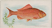 Goldfish, from the Fish from American Waters series (N8) for Allen & Ginter Cigarettes Brands