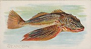 Sea Robin, from the Fish from American Waters series (N8) for Allen & Ginter Cigarettes Brands