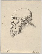 Plate 8: head of an old bald man with a long beard, facing left in profile, from 'Various heads and figures' (Diverses têtes et figures)