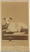 From the Dogs series (N47) for Virginia Brights Cigarettes