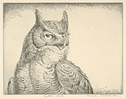 Horned Owl (Portrait Great Horned Owl)