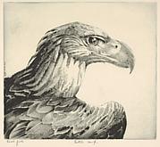 Aquiline (Eagle Head)
