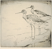 Two Yellow-legs (Wading in)