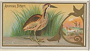 American Bittern, from the Game Birds series (N13) for Allen & Ginter Cigarettes Brands