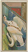 American Ptarmigan, from the Game Birds series (N13) for Allen & Ginter Cigarettes Brands