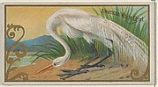 American White Egret, from the Game Birds series (N13) for Allen & Ginter Cigarettes Brands