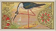 Black-necked Stilt, from the Game Birds series (N13) for Allen & Ginter Cigarettes Brands