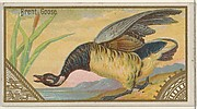 Brent Goose, from the Game Birds series (N13) for Allen & Ginter Cigarettes Brands