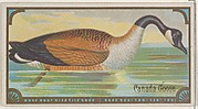 Canada Goose, from the Game Birds series (N13) for Allen & Ginter Cigarettes Brands