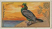 Cormorant, from the Game Birds series (N13) for Allen & Ginter Cigarettes Brands