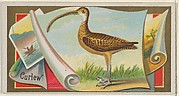 Curlew, from the Game Birds series (N13) for Allen & Ginter Cigarettes Brands