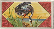 Great Blue Heron, from the Game Birds series (N13) for Allen & Ginter Cigarettes Brands