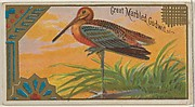 Great Marbled Godwit, from the Game Birds series (N13) for Allen & Ginter Cigarettes Brands