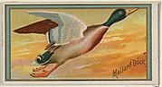 Mallard Duck, from the Game Birds series (N13) for Allen & Ginter Cigarettes Brands