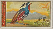 Plumed Partridge, from the Game Birds series (N13) for Allen & Ginter Cigarettes Brands