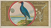 Purple Gallinule, from the Game Birds series (N13) for Allen & Ginter Cigarettes Brands