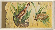 Rail, from the Game Birds series (N13) for Allen & Ginter Cigarettes Brands