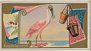 Roseate Spoonbill, from the Game Birds series (N13) for Allen & Ginter Cigarettes Brands