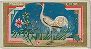 Whopping Crane, from the Game Birds series (N13) for Allen & Ginter Cigarettes Brands