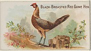Black-Breasted Red Game Hen, from the Prize and Game Chickens series (N20) for Allen & Ginter Cigarettes