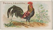 Brown Leghorn, from the Prize and Game Chickens series (N20) for Allen & Ginter Cigarettes